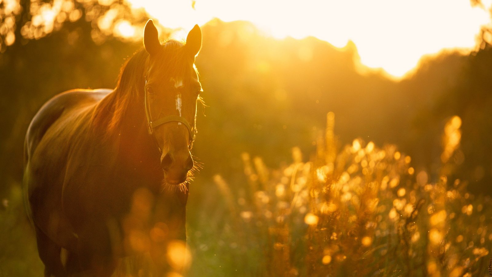 La passion du cheval en famille avec Belle Ferme !