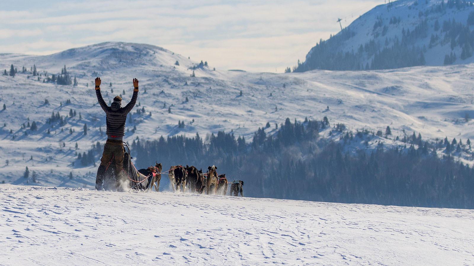 Vis ma vie de chien de traîneau par Luna, du Chalet des Sibériens