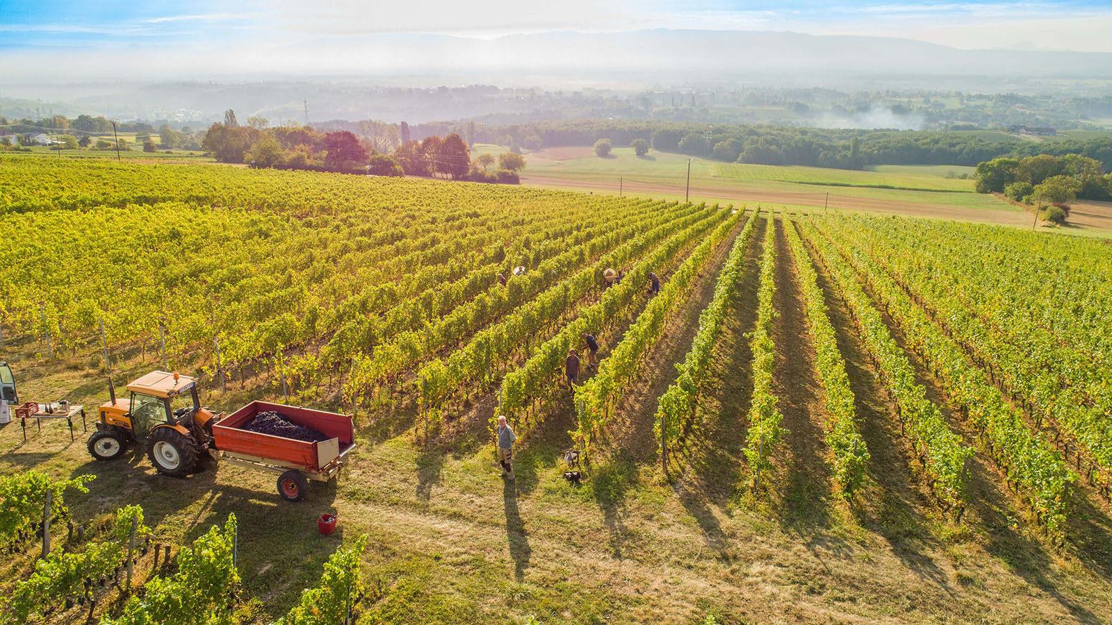 Le domaine de Mucelle à Challex, dernier village viticole du Pays de Gex