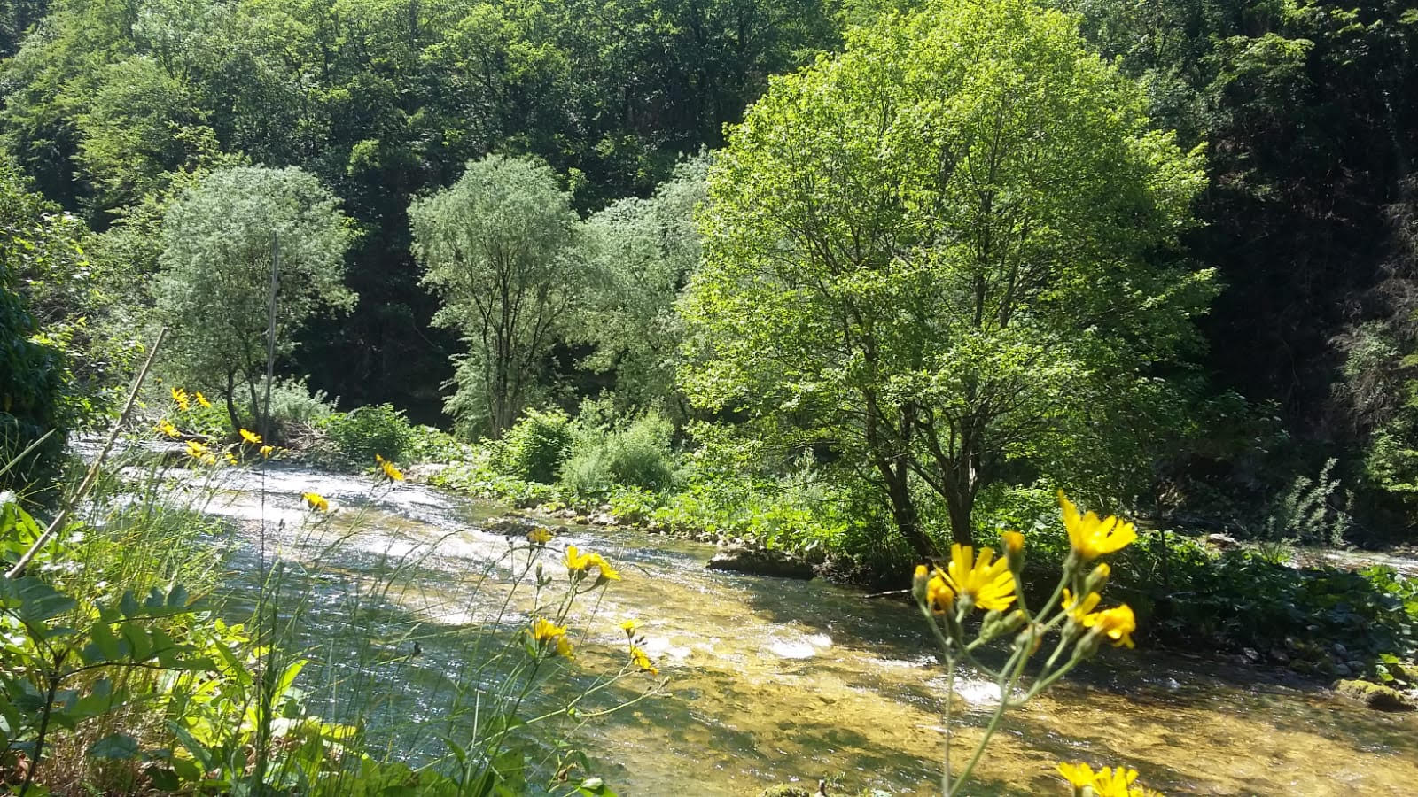 Les Pertes de la Valserine : un véritable trésor naturel