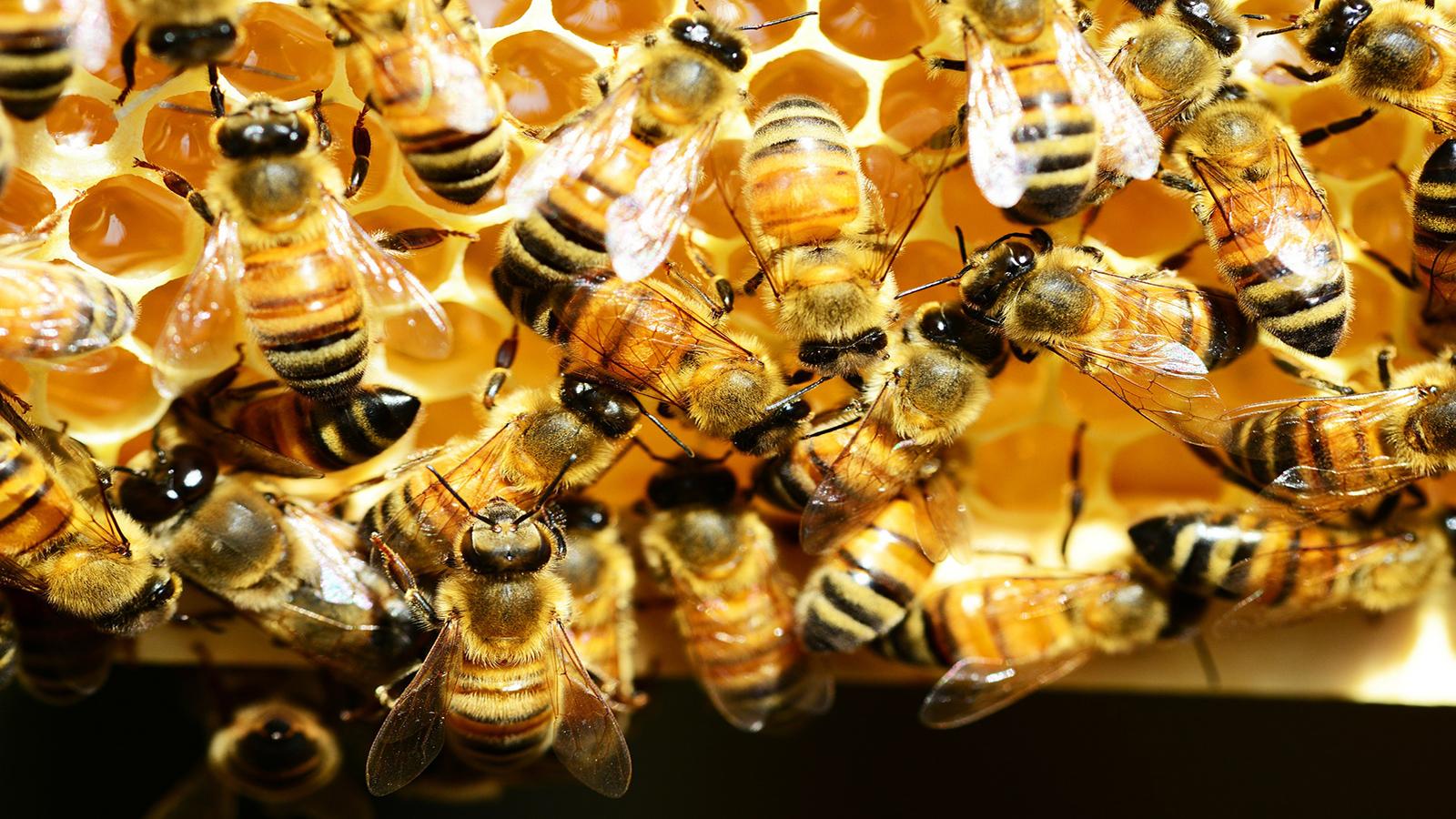 L'apiculture, tout un univers ! Allons butiner quelques infos…