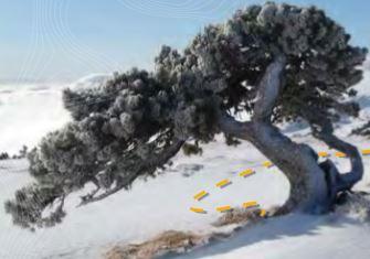 Balade en raquette : De la Catheline au Crêt de la Neige