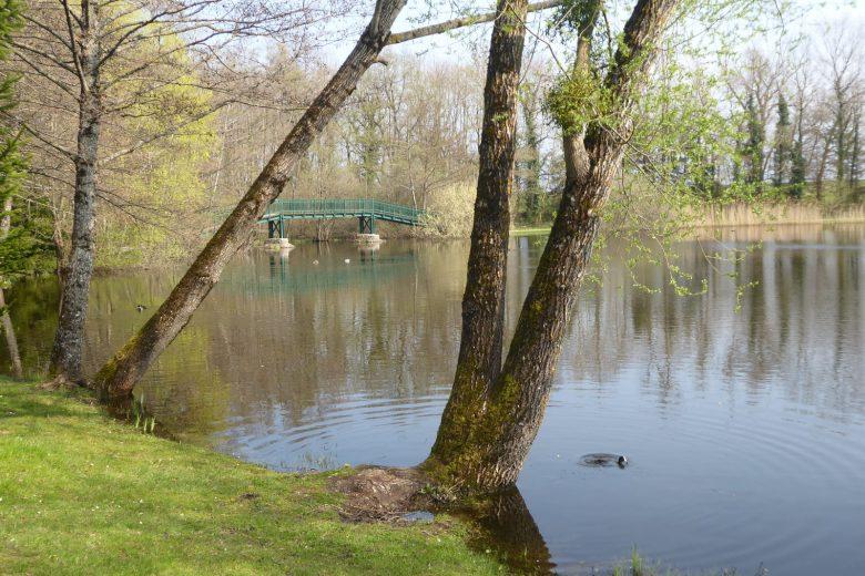 L'étang de Cessy